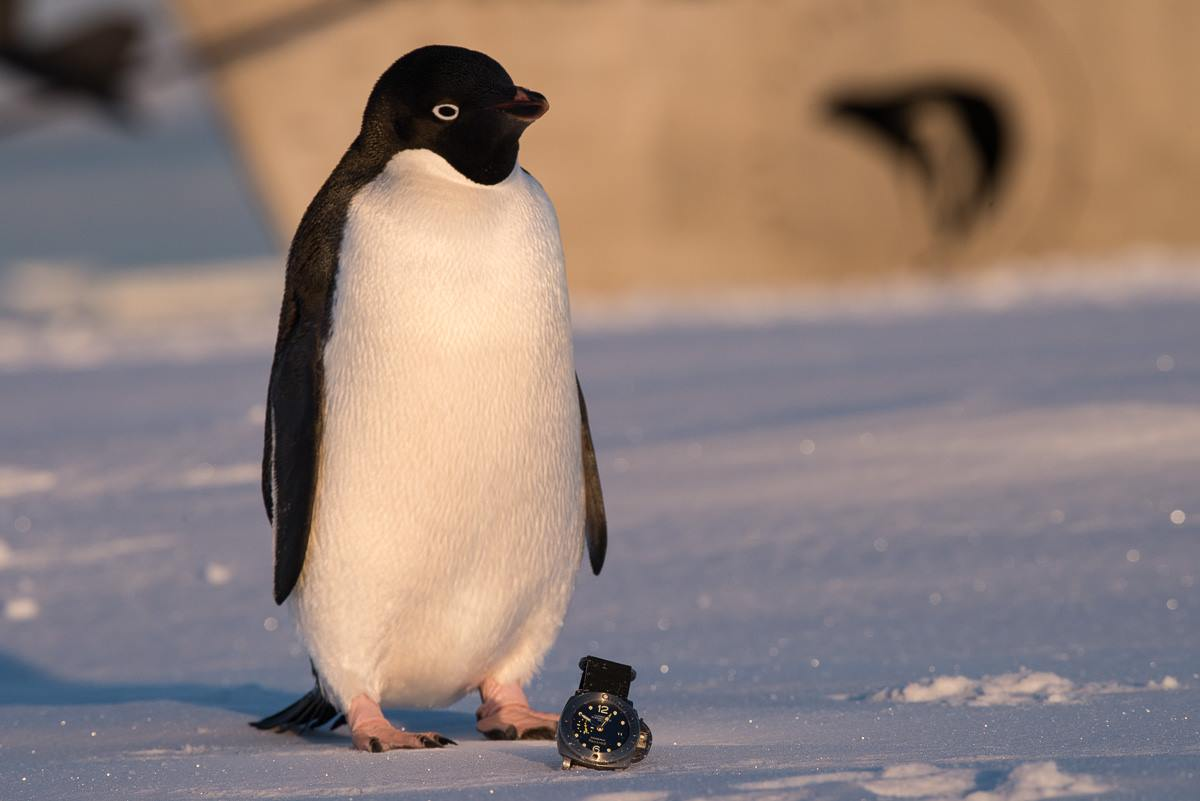 antarctique-pole2pole-montres-de-Mike-Horn-Panerai-taillées-pour-laventure-montre-luxe-copyright-mike-horn-panerai